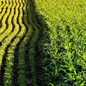 Выращивание сельскохозяйственных культур