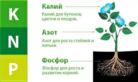 Применение удобрений в капельном поливе
