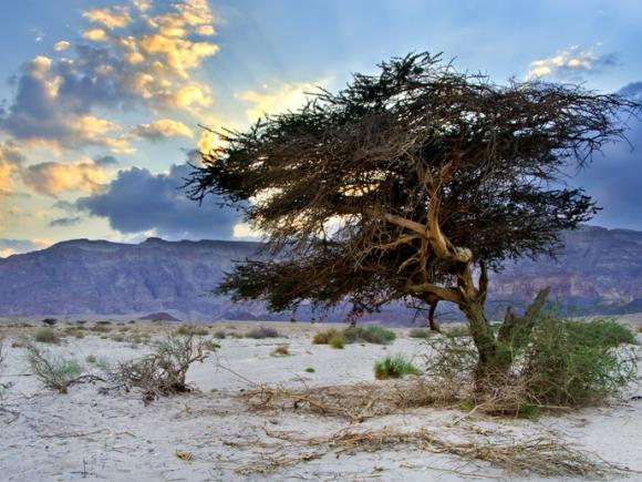 Дерево в сухой почве