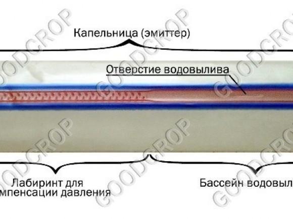 Строение щелевой ленты