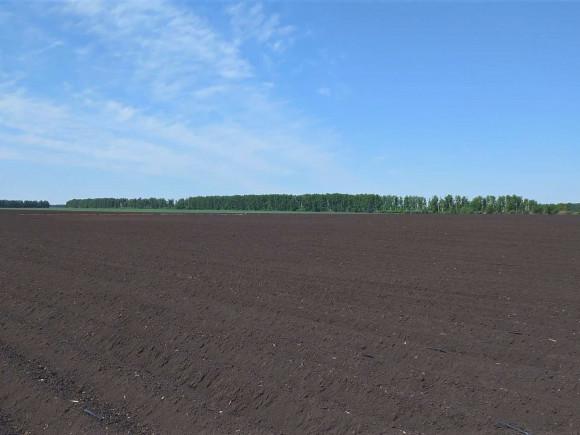 Картофельное поле под капельным поливом
