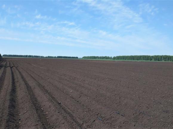 Капельное орошение картофеля