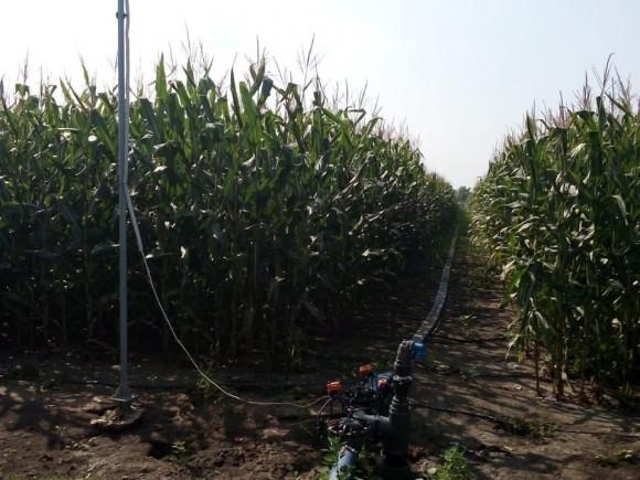 Автоматизация поливных блоков для капельного орошения кукурузы