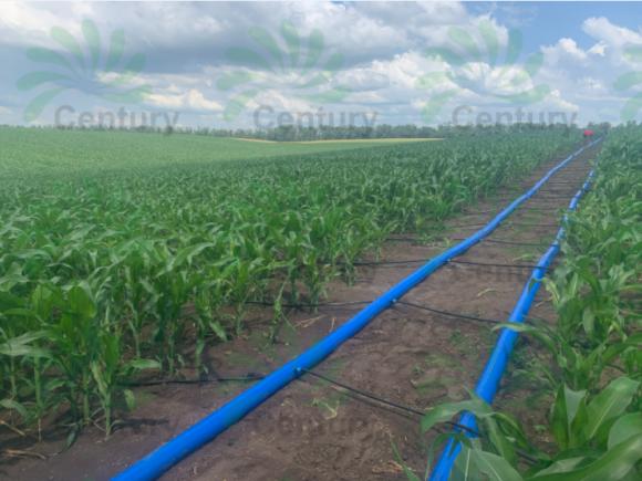 Капельное орошение кукурузы